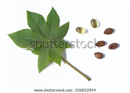 One leaf of the castor plant, before a white background with castor oil capsules for oral use in cases of constipation and some seeds