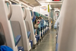 One little dog sitting on the train chair, looking at camera between the rows, traveling. Funny interesting unusual shot, photo.