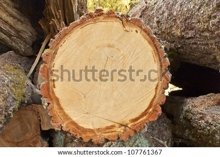 One log closeup compared to other timber