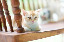 One lonely cat.Kitten alone.Feline looking at camera feeling sad.Isolated feline portrait.Weak kitty eyes.Wooden country bench with animal.