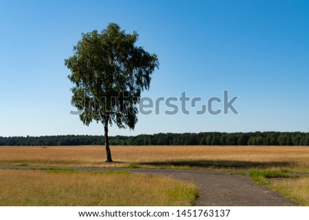 One lonely path and a lonely tree in the middle of a desert made of grass, the blue sky above - self finding concept