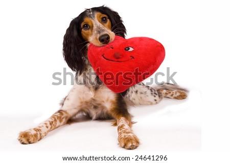 One loving dog!