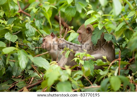 One monkey looks after another sitting on branches of a tree