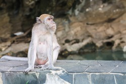 One monkey sitting on a rock bar