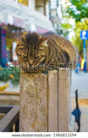 One of Istanbul's many street cats in the Moda neighbourhood of Kadikoy on the Asian side of the city Foto d'archivio ©