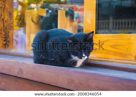 One of Istanbul's many street cats on a windowsill in the Moda neighbourhood of Kadikoy on the Asian side of the city Foto d'archivio ©