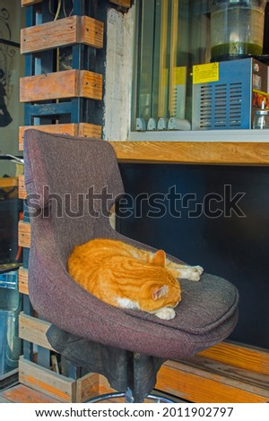 One of Istanbul's many street cats sleeps on a chair ourside a bar in the Moda neighbourhood of Kadikoy on the Asian side of the city Foto d'archivio ©