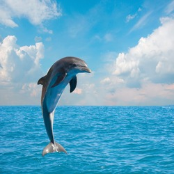one of jumping dolphins,beautiful seascape with deep  ocean  waters and cloudscape