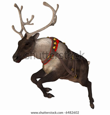 One of Santa's reindeer. Isolated on a white background.