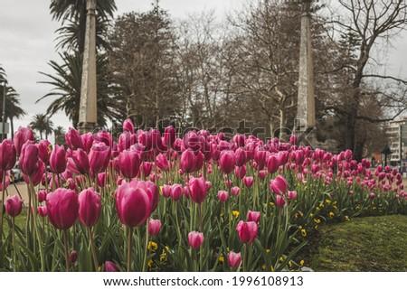 One of the entrances of Jardim do Passeio Alegre when the tulips where in full bloom. City of Porto, Portugal. Foto stock ©