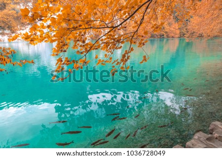 One of the most astonishing Plitvice Lakes, Croatia doring autumn times. A truly virgin and wonderful piece of nature.