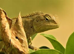One of the most fast and efficient predators - A type of Lizard/Reptile