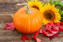 one orange pumpkin with sunflowers and red fall leaves on wooden textured  table