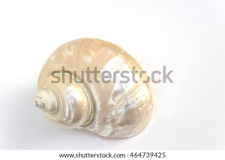 One pearl conch on a white background #464739425
