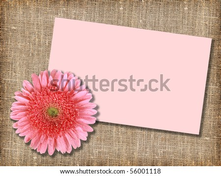 One pink flower with message-card on  textile background. Close-up. Studio photography.