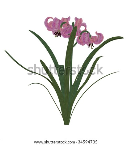 One pink lily on a white background