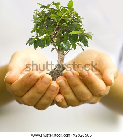 One plant in female hands