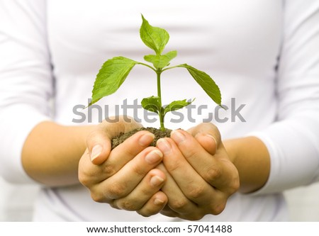 One plant in female hands on white background