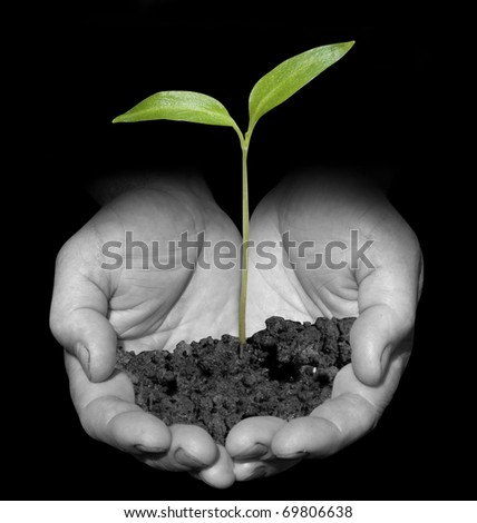 One plant in old male hands on black background