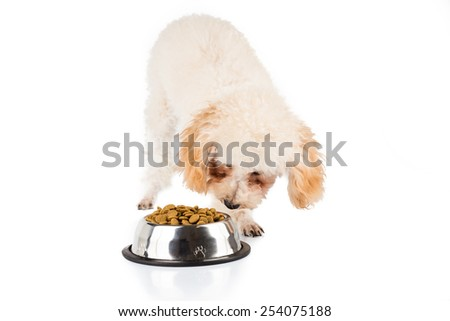 One poodle puppy eating kibbles from a bowl, with the other not interested. #254075188
