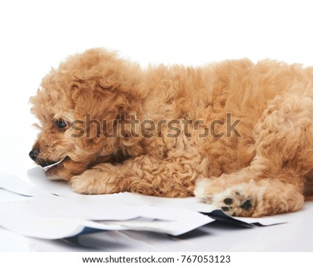 One puppy chewing photo paper isolated on white background