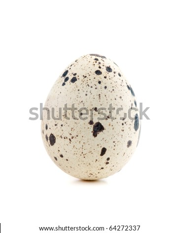 One quail egg. Isolated on white background