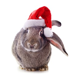 One rabbit in Christmas hat isolated on a white background.