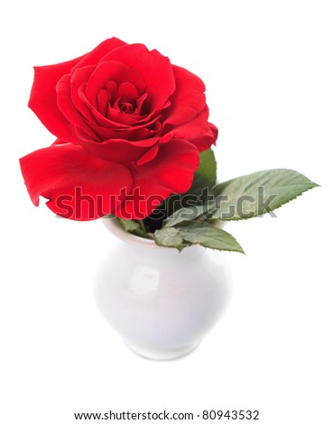 One red rose in vase isolated on white background