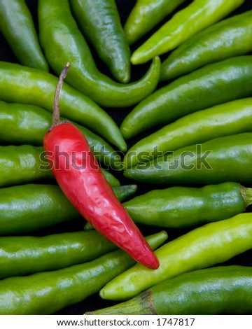 One red thai chili pepper lying on a bed of green thai chili peppers