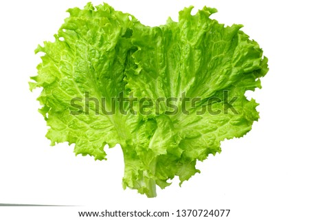 one salad leaf isolated on a white background Сток-фото ©