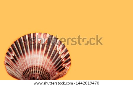 One scallop top view on yellow background