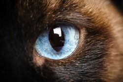 one siamese cat eye macro extreme closeup with reflection of photographer