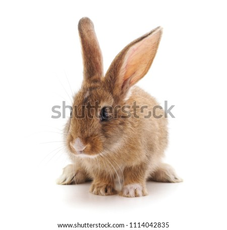 One small brown rabbit isolated on a white background. #1114042835