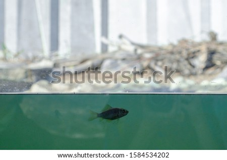 One small lonely fish in a large blue water, aquarium, behind it a whole world, dry, light, but inhospitable, concept of self-reliance, loneliness, adult