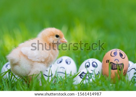 One small yellow chicken and Many eggs and many emotions were placed on green grass in beautiful sunlight. Copy space and Selective focus  #1561414987