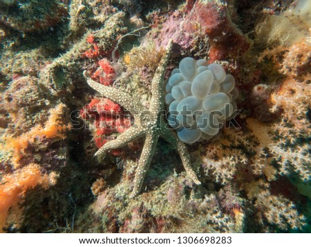 one that we often encounter when diving in is a starfish. the types vary, some are large, some are small. some are brown and some are blue