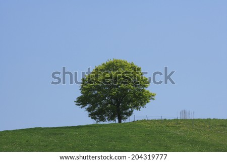 One Tree And Hill