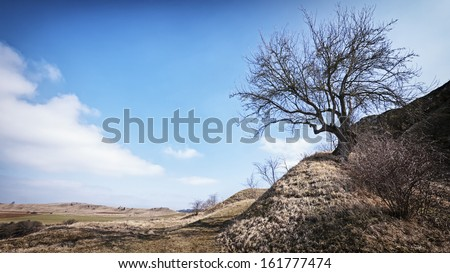 one tree at a dry hill