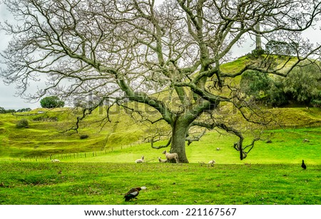 One tree hill park at Auckland, New Zealand
