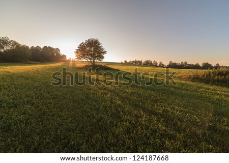 One tree in the field on sunrise