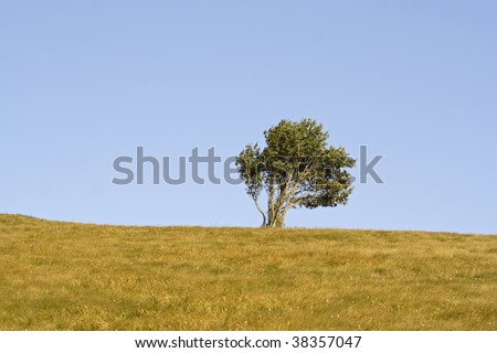 one tree on a hill