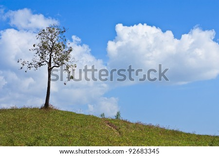 One tree on hill and blue sky