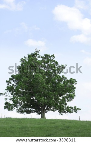 One tree on hill with grass