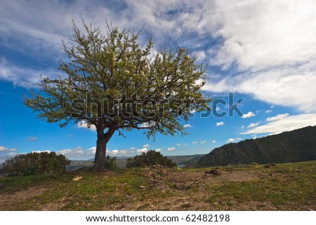 One tree on top of a hill with blue sky and clouds