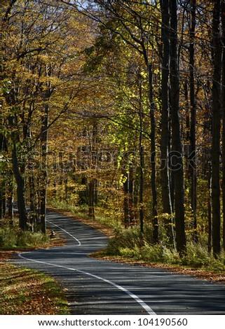 One-Way Autumn Drive- A one-way street on Pierce Stocking Drive, Sleeping Bear Dunes National Lake Shore, Empire, MI