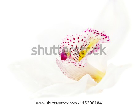 one white beautiful orchid with water drops isolated on white background