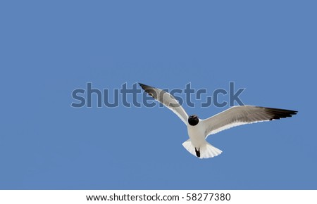 one white black headed bird flying against a perfect blue sky