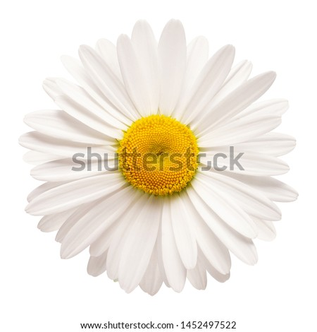Photo of  One white daisy flower isolated on white background. Flat lay, top view. Floral pattern, object