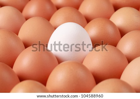 One white egg surrounded by brown eggs in a box. The focus is on the white egg.