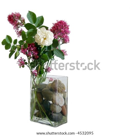 One White Rose Between Pink Flowers Stock foto ©